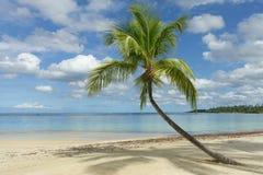 Tropical beach and palm tree Stock Photos
