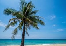Tropical beach with palm tree. Palm tree on the beautiful tropical sandy beach over blue sea and sky background Royalty Free Stock Photography