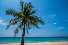 Tropical beach with palm tree. Palm tree on the beautiful tropical sandy beach over blue sea and sky background Royalty Free Stock Photos