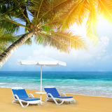 Tropical beach with palm tree Stock Image