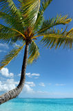 Tropical beach with a palm tree Royalty Free Stock Images