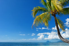 Tropical beach with palm tree Stock Images