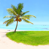 Tropical beach and palm tree. Tropical beach and palm tree with coconuts, blue sea and sunny sky on a background. Greeting from paradise Royalty Free Stock Photography