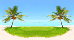 Tropical beach and palm tree. Royalty Free Stock Photography