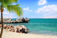 Tropical Beach with Palm Tree Royalty Free Stock Images
