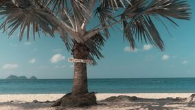 Tropical beach and palm tree. With the inscription private area stock video footage