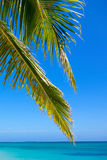 Tropical beach with palm tree leaves Stock Photography
