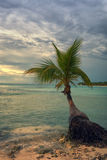 Tropical beach with a palm tree Stock Photography