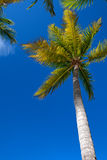 Tropical beach with a palm tree Royalty Free Stock Photos