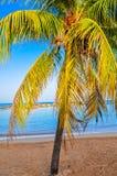 Tropical beach Stock Photography