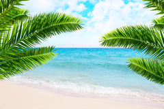 Tropical beach and palm tree. Stock Photography