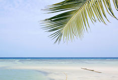 tropical beach with palm tree and sand Stock Photo