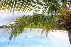 Tropical beach and palm tree Royalty Free Stock Image