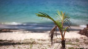 Tropical beach and small palm tree. 1920x1080 stock video