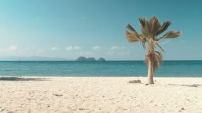 Tropical beach and palm tree. In sunny day stock video footage