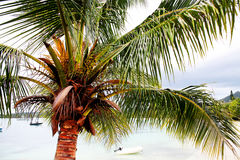 Tropical beach and palm tree Royalty Free Stock Photography