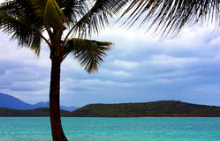 Tropical beach and palm tree Royalty Free Stock Images