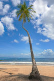 Tropical beach palm tree Trinidad and Tobago Maracas Bay blue sky and sea Royalty Free Stock Photography