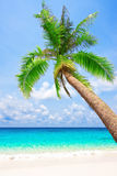 Tropical beach with palm tree Royalty Free Stock Photography