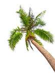 Tropical beach with palm tree Royalty Free Stock Photo