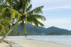 Tropical beach with palm trees. Beautiful tropical beach with palm trees Royalty Free Stock Photography