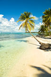 Tropical beach and palm trees Stock Photography