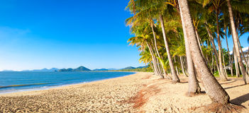 Tropical beach with palm trees Stock Images