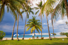 Tropical beach with palm trees, dramatic sky Royalty Free Stock Photo
