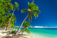 Tropical beach with palm trees on Fiji Islands Royalty Free Stock Images
