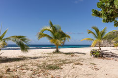 Tropical beach with palm trees in Guadeloupe Royalty Free Stock Photos