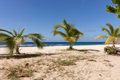 Tropical beach with palm trees in Guadeloupe Royalty Free Stock Images