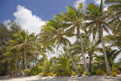 Tropical Beach with Palm Trees and Hut Stock Photo