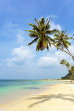 Tropical beach with palm trees, Koh Samui island. Stock Photo