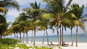 Tropical beach with palm trees and lounges. Beach, nature, sea, summer vacation and leisure concept - tropical beach with palm trees and lounges stock video footage