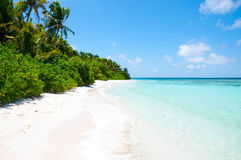 Tropical beach with palm trees, Maldives Stock Image