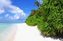 Tropical beach with palm trees, Maldives Stock Images