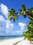 Tropical beach with palm trees, Maldives. Tropical beach with palm trees, Thinadhoo island, Vaavu Atoll, Maldives Royalty Free Stock Images