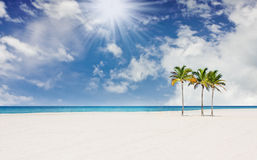 Tropical beach with  palm trees in Miami Florida Stock Photo