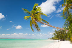 Tropical beach with palm trees. Beach, nature, sea, summer and leisure concept - tropical beach with palm trees Stock Photo