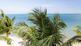 Tropical beach with palm trees stock footage