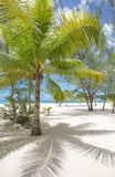 Tropical beach with palm trees, no people. Tropical sandy beach with palm trees, no people Royalty Free Stock Images