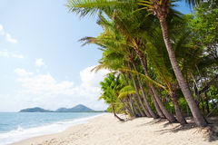 Tropical beach with palm trees in north Queensland Royalty Free Stock Photo