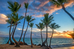 Tropical beach with palm trees and ocean Stock Image