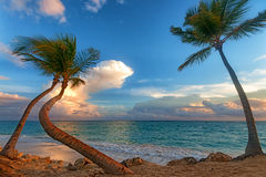 Tropical beach with palm trees and ocean Stock Photos