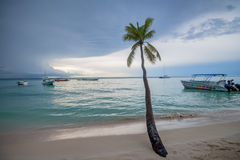 Tropical beach with palm trees and ocean Royalty Free Stock Photos