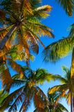 Tropical beach with palm trees. Paradise tropical beach with palm trees on blue sky background Royalty Free Stock Image