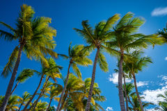 Tropical beach with palm trees. Paradise tropical beach with palm trees on blue sky background Stock Photo