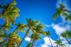 Tropical beach with palm trees. Paradise tropical beach with palm trees on blue sky background Stock Photos