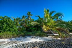 Tropical beach with palm trees. Paradise tropical beach with palm trees on blue sky background Royalty Free Stock Photo
