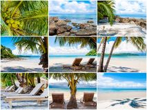 Tropical beach with palm trees Stock Photography